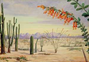 Marianne North - végétation de  au  DU DESERT  de  en Arizona
